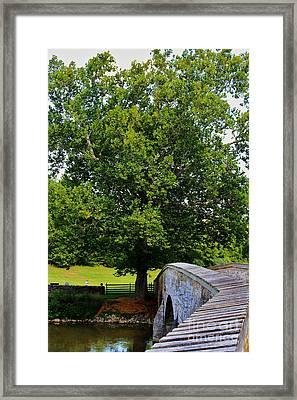 Civil War Era Eastern Sycamore Tree Framed Print by Patti Whitten