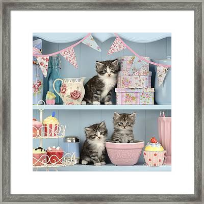 Baking Shelf Kittens Framed Print by Greg Cuddiford