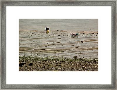 Clam Digger In Fundy Bay-ns Framed Print by Ruth Hager