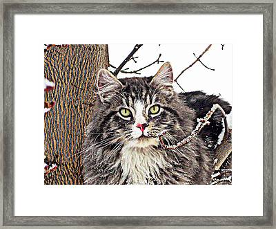 Framed Print featuring the photograph Clancy by Kathy Bassett