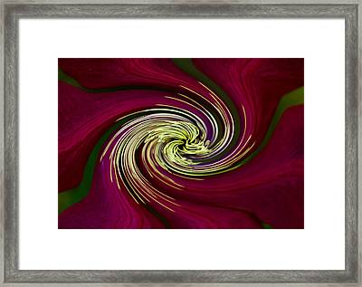 Claret Red Swirl Clematis Framed Print by Debbie Oppermann
