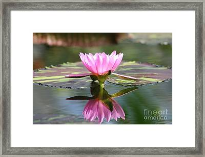 Clarity Framed Print by Mary Lou Chmura
