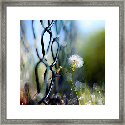 Clash Of The Titans Framed Print by Laura Fasulo