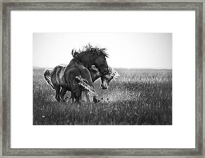Clash Of Two Wild Stallions Framed Print