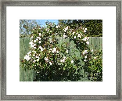 Classic Beauty Framed Print by Anat Gerards