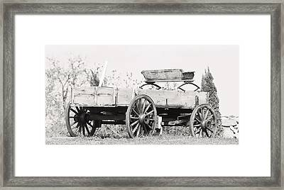 Classic Character.... Framed Print by Tammy Schneider
