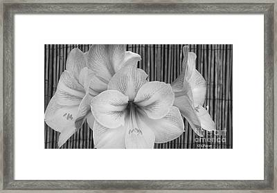 Classic Lilies Framed Print by Greg Patzer