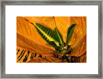Classic Motion Picture Framed Print by Thorne Owenly
