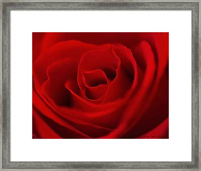 Framed Print featuring the photograph Classic Rose by Kathy Ponce