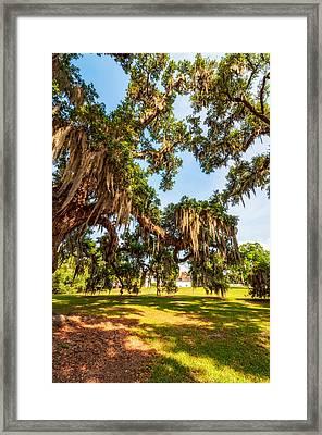 Classic Southern Beauty 2 Framed Print by Steve Harrington