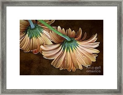 Classy Down Framed Print by Shirley Mangini