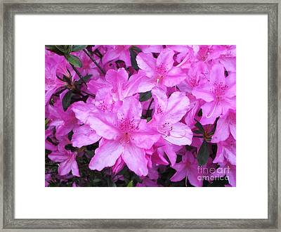 Framed Print featuring the photograph Azaleas by Donna Dixon