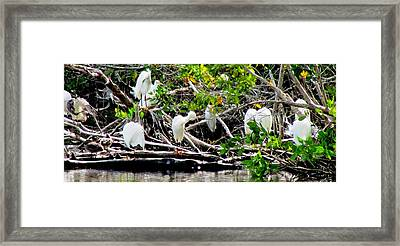 Cleaning Time Framed Print by Will Boutin Photos