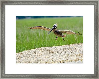 Framed Print featuring the photograph Clear For Landing by Steven Santamour