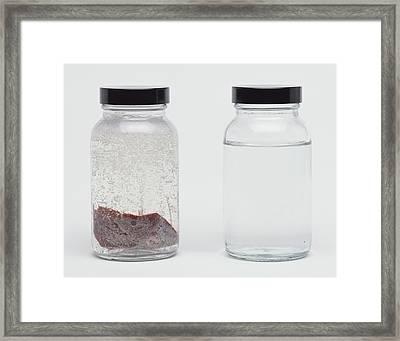 Clear Jar Of Liver In Liquid Framed Print by Dorling Kindersley/uig