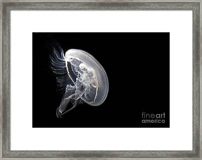 Clear Jelly Fish In Dark Water Art Prints Framed Print
