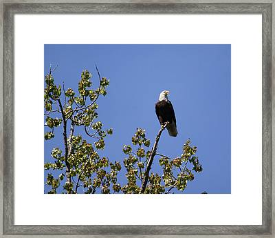 Clear View Framed Print