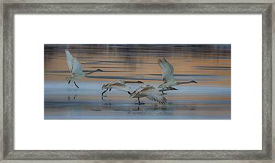 Cleared For Take Off Framed Print