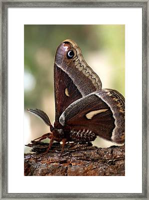 Clem The Moth Framed Print