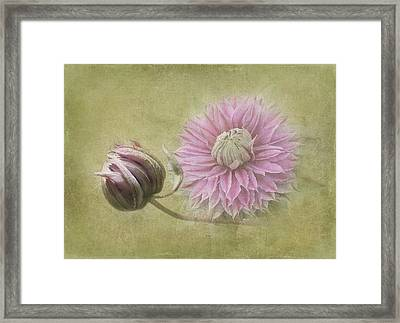 Clematis Beauty Framed Print