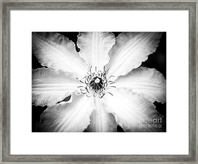 Clematis Black And White Framed Print