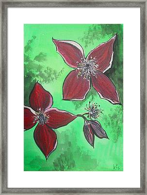 Clematis Burgundy Framed Print by Kathy Spall