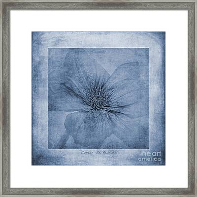 Clematis Cyanotype Framed Print by John Edwards