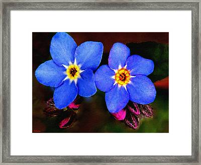 Clematis Flowers Framed Print by Bob and Nadine Johnston