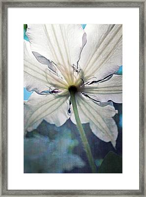 Clematis In Morning Sun Framed Print by Michelle Calkins