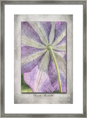 Clematis Miniseelik  Framed Print