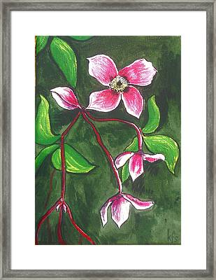 Clematis Montana Rubins Framed Print by Kathy Spall