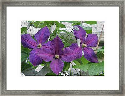 Clematis Necklace Framed Print by Sonali Gangane