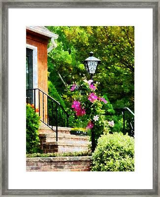 Clematis On A Lamp Post Framed Print by Susan Savad