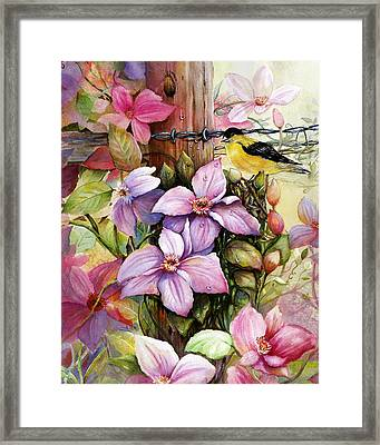 Clematis Vine And Goldfinch Framed Print by Patricia Schneider Mitchell