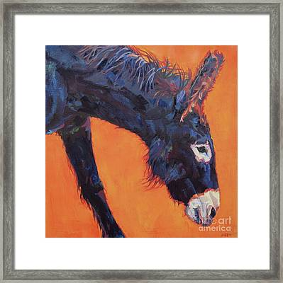 Clementine Framed Print by Patricia A Griffin