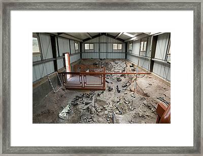 Cleveland-lloyd Dinosaur Quarry Fossils Framed Print by Jim West