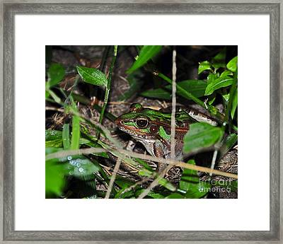 Clever Camo Framed Print by Al Powell Photography USA