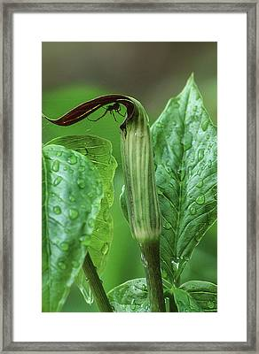 Clever Hideout Framed Print