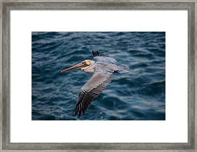 Cliff Cruising Framed Print by Sonny Marcyan