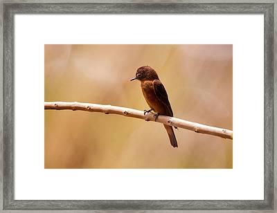 Cliff Flycatcher Hirundinea Ferruginea Framed Print by Leonardo Mer�on