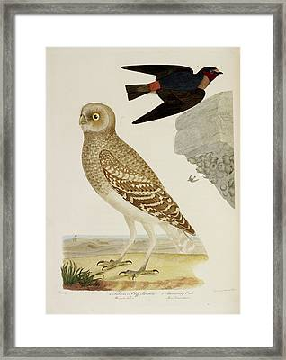 Cliff Swallow And Burrowing Owl Framed Print