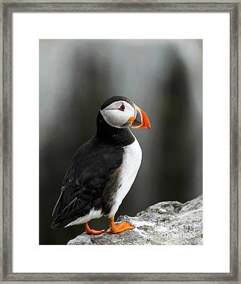 Cliff Top Puffin Framed Print