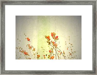 Climb The Sky Framed Print