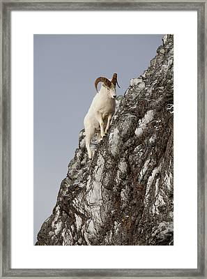 Climbing An Icy Cliff Framed Print by Tim Grams