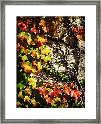 Climbing Color Framed Print by Mary Willrodt
