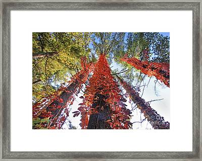 Climbing Colors Framed Print