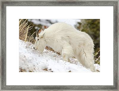 Climbing Higher Framed Print by Yeates Photography