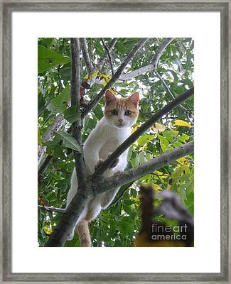 Framed Print featuring the photograph Climbing Kitty by Wendy Coulson
