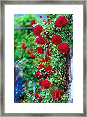 Climbing Red Roses Framed Print by C Lythgo