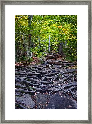 Climbing The Rocks And Roots Of Bald Mountain Framed Print